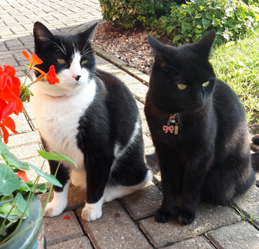 Alfie and Tommie